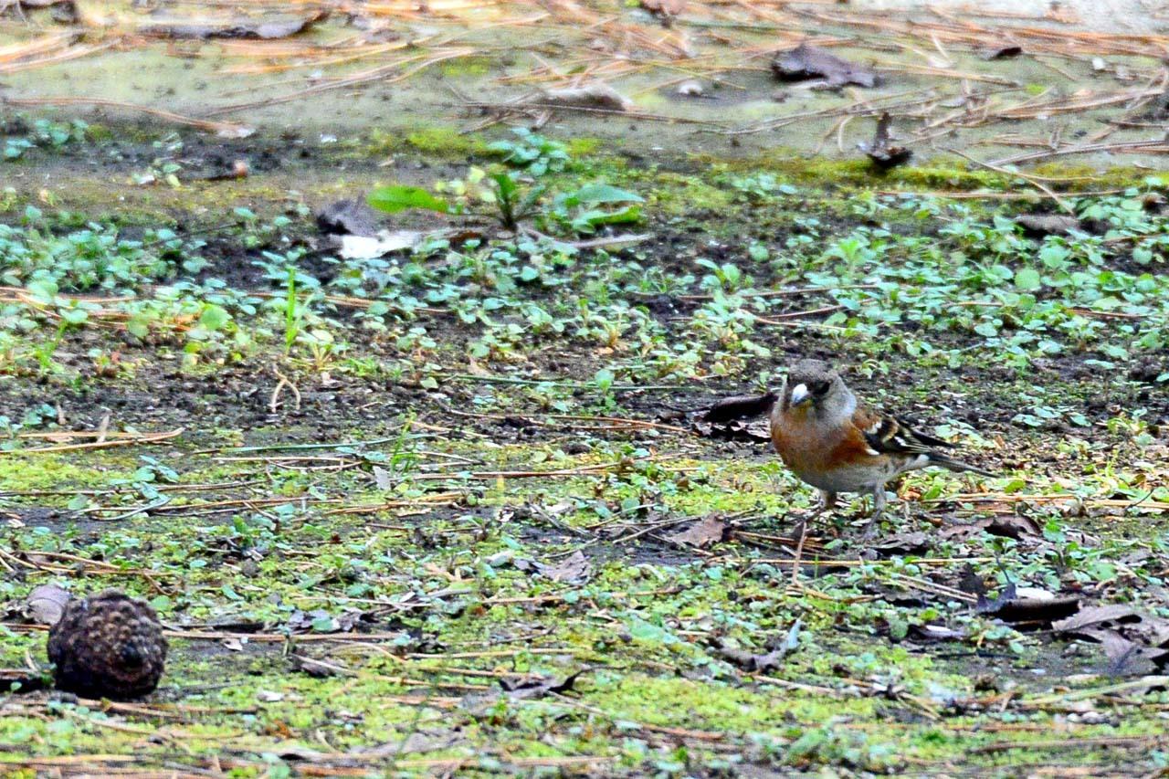 DSC_6536今日の鳥