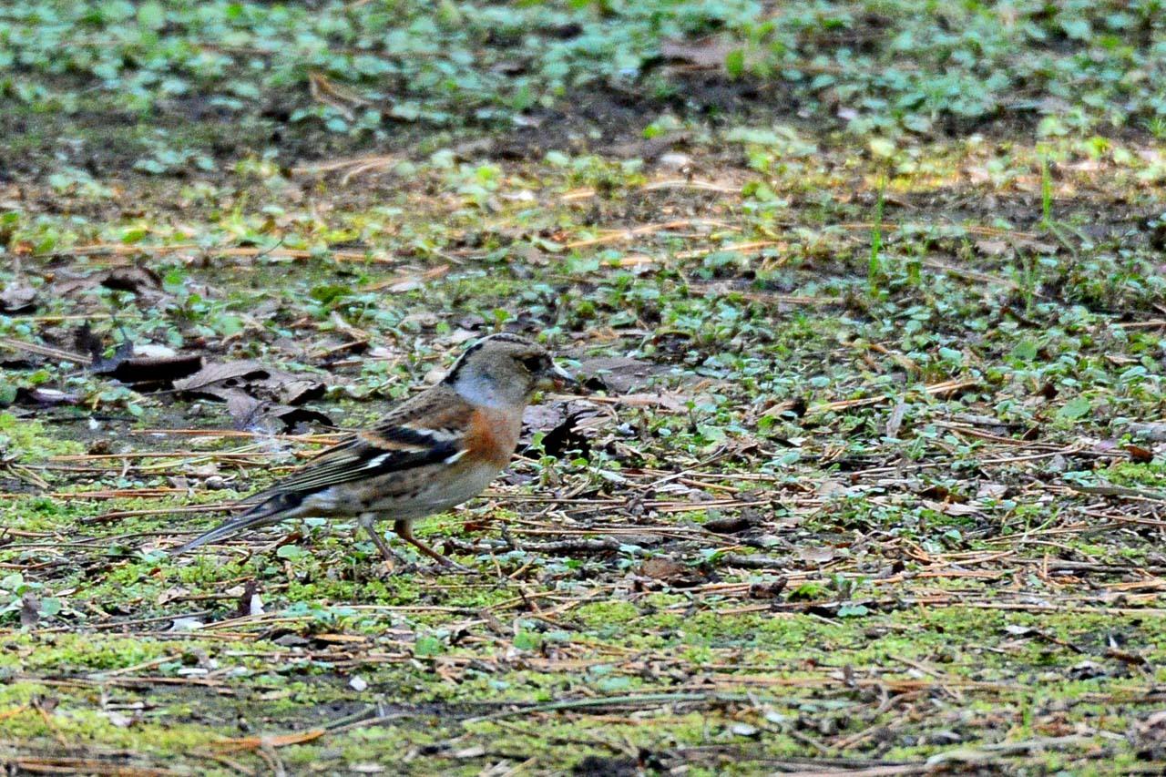 DSC_6584今日の鳥