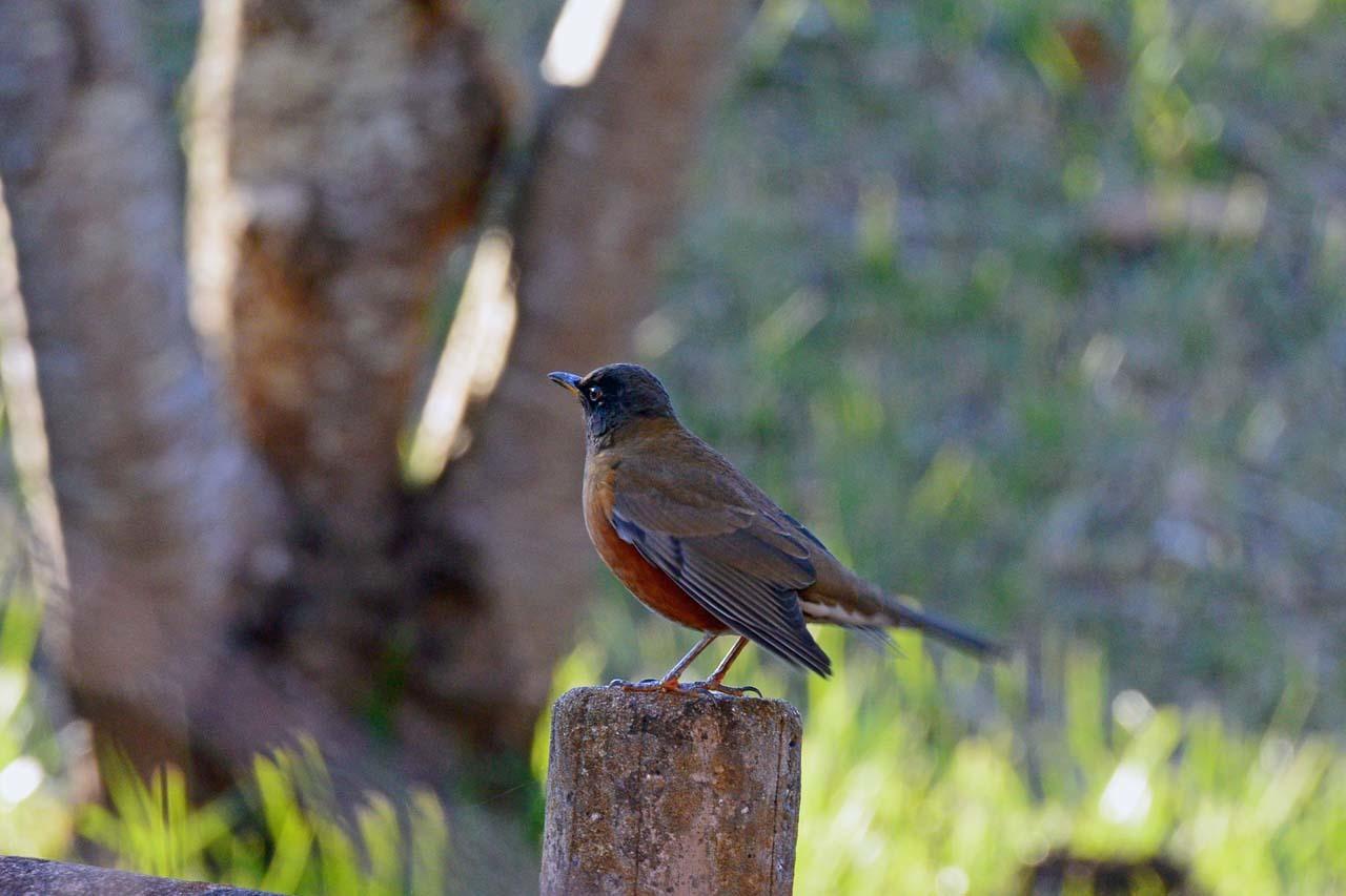 DSC_5640今日の鳥