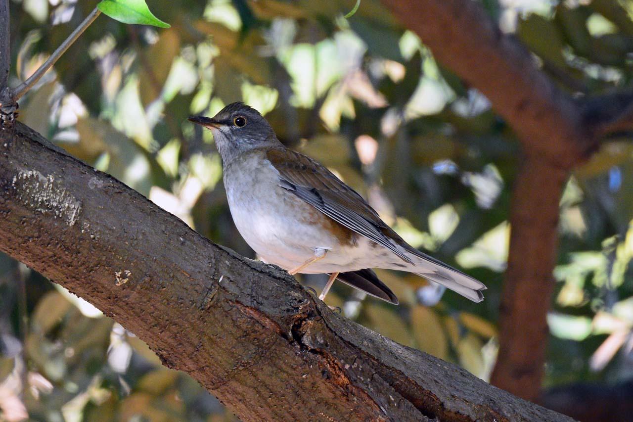 DSC_6259今日の鳥