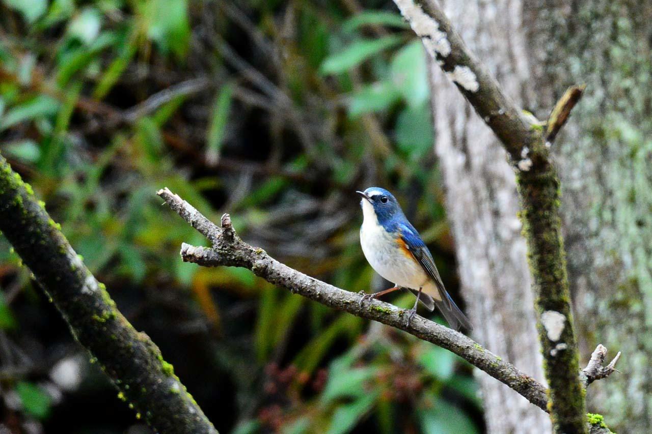 DSC_6863今日の鳥