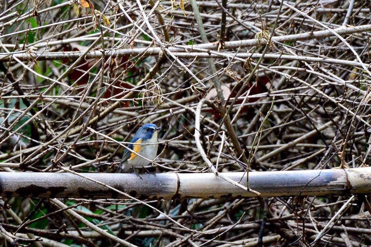 DSC_6844今日の鳥