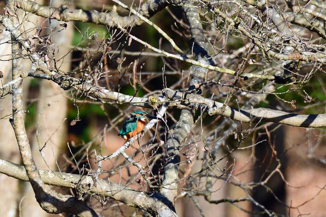 DSC_7150今日の鳥