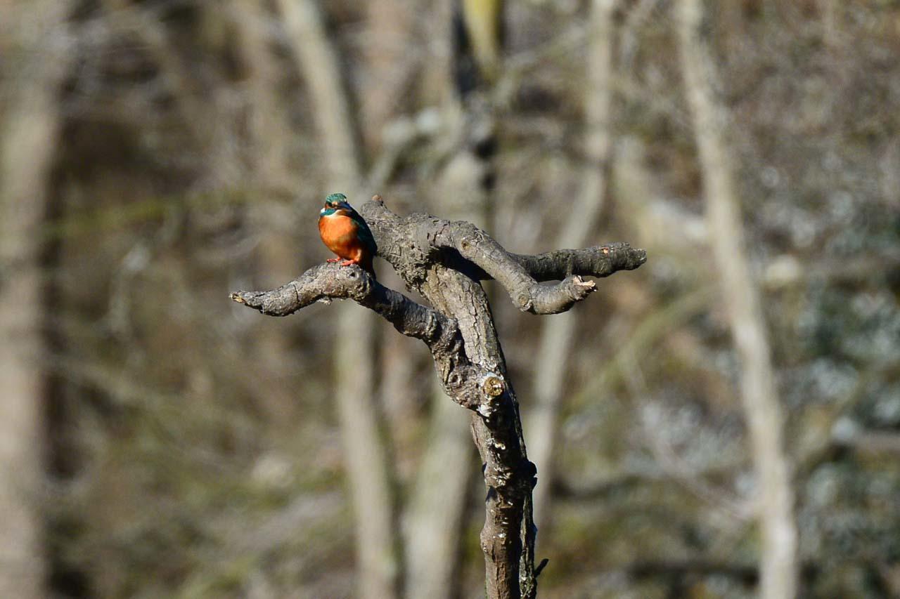 DSC_7204今日の鳥