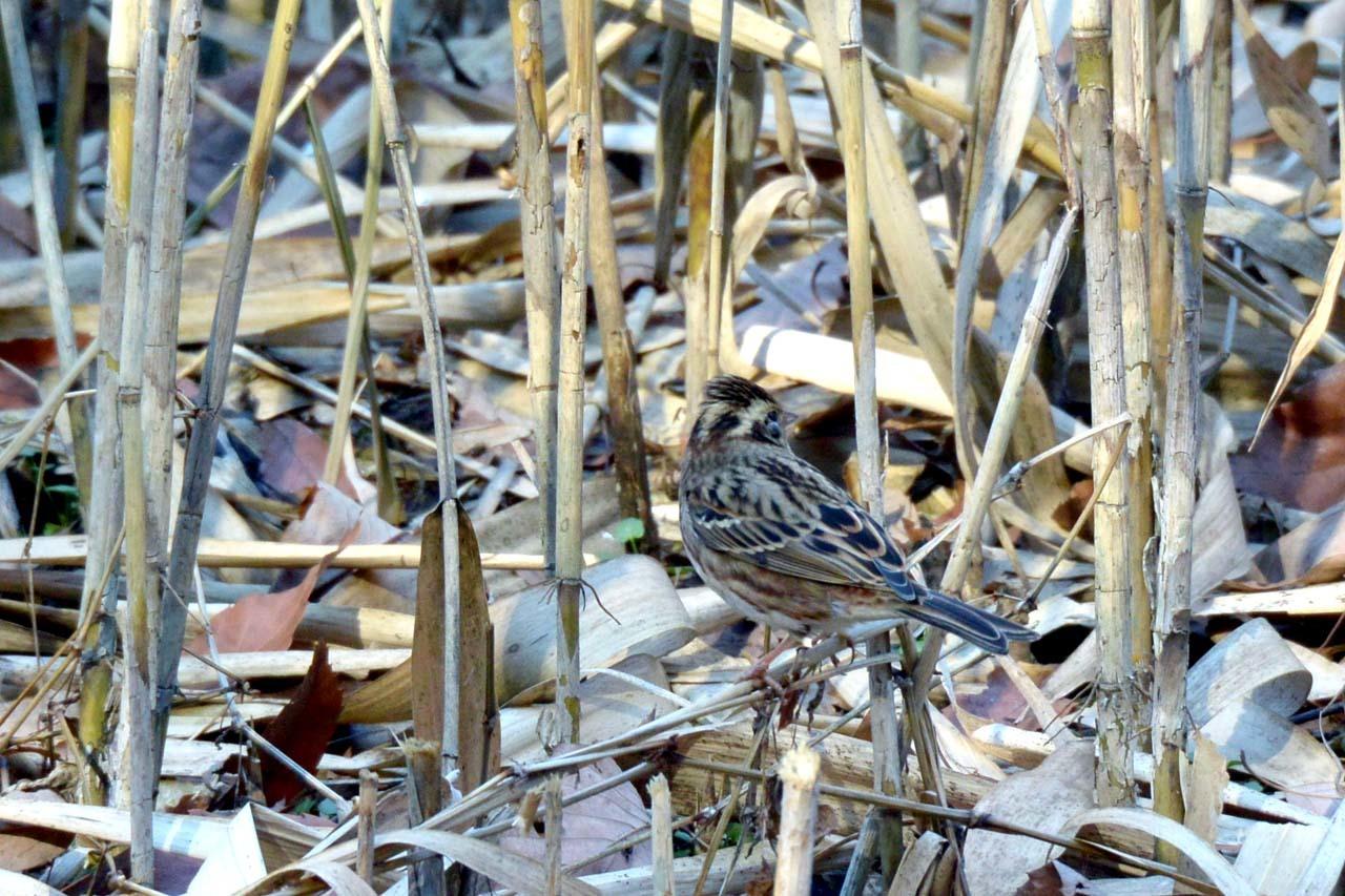 DSC_9577今日の鳥