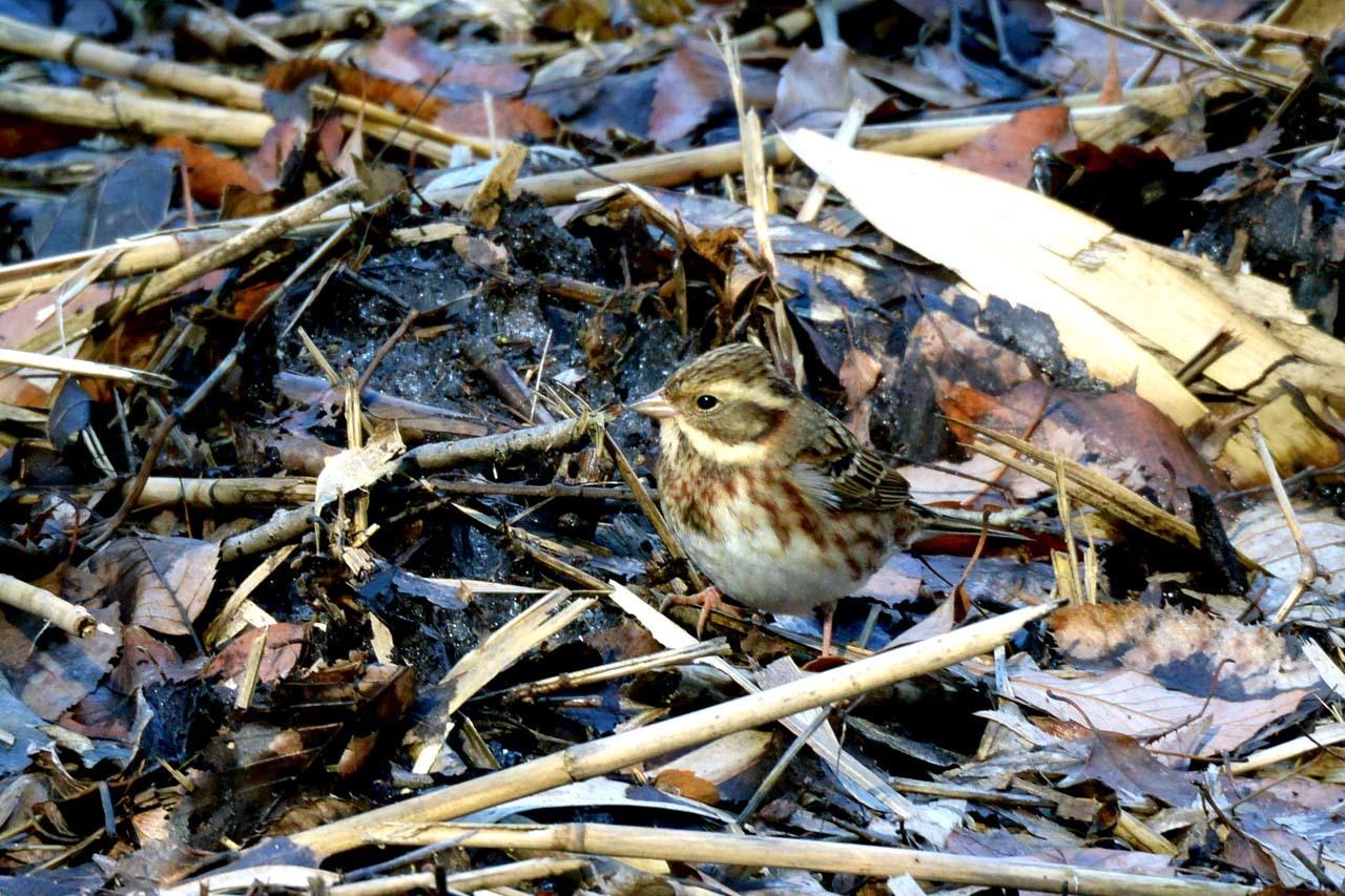 DSC_9573今日の鳥