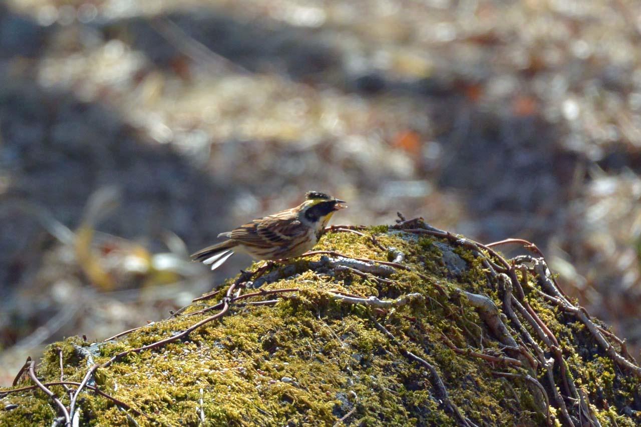 DSC_1954今日の鳥