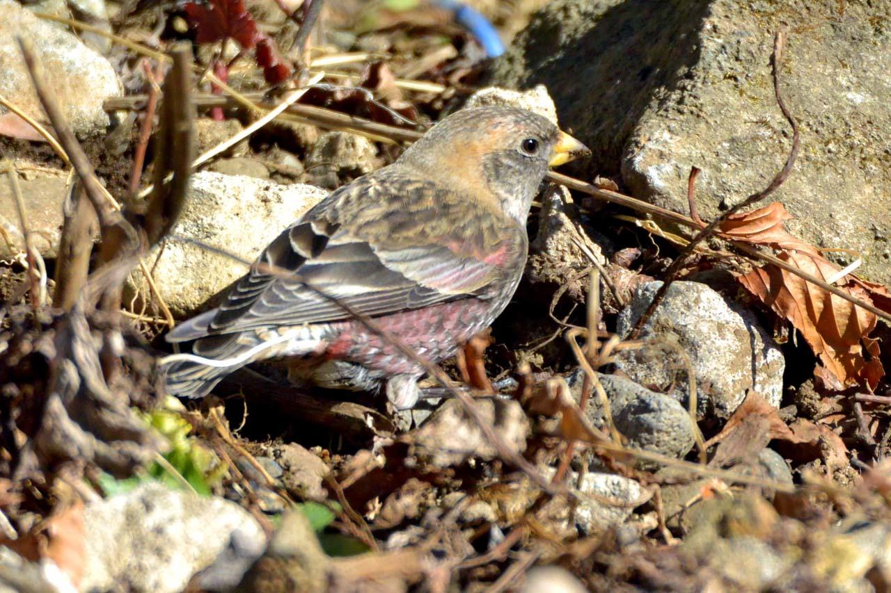 DSC_2518今日の鳥