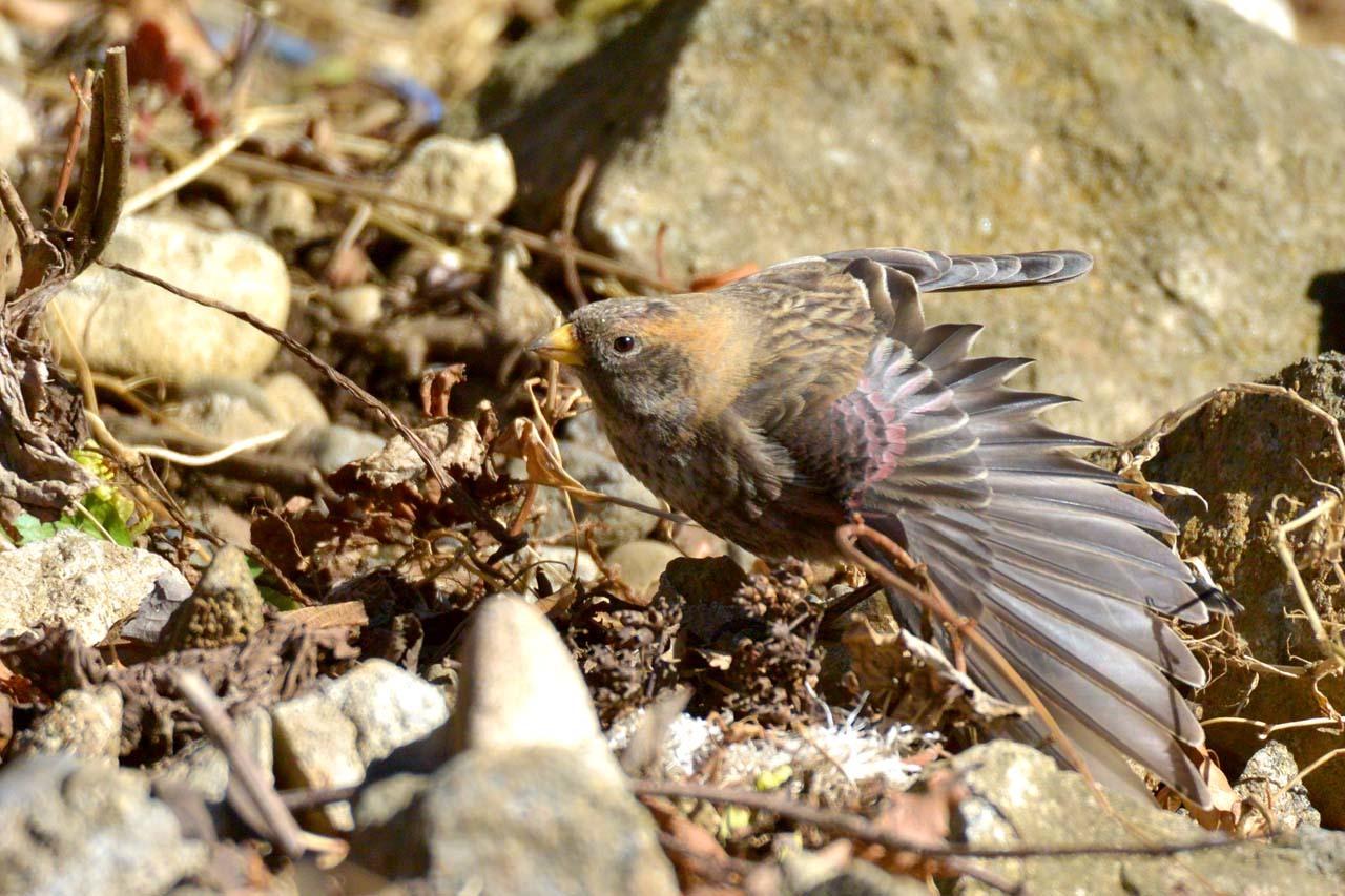 DSC_2480今日の鳥