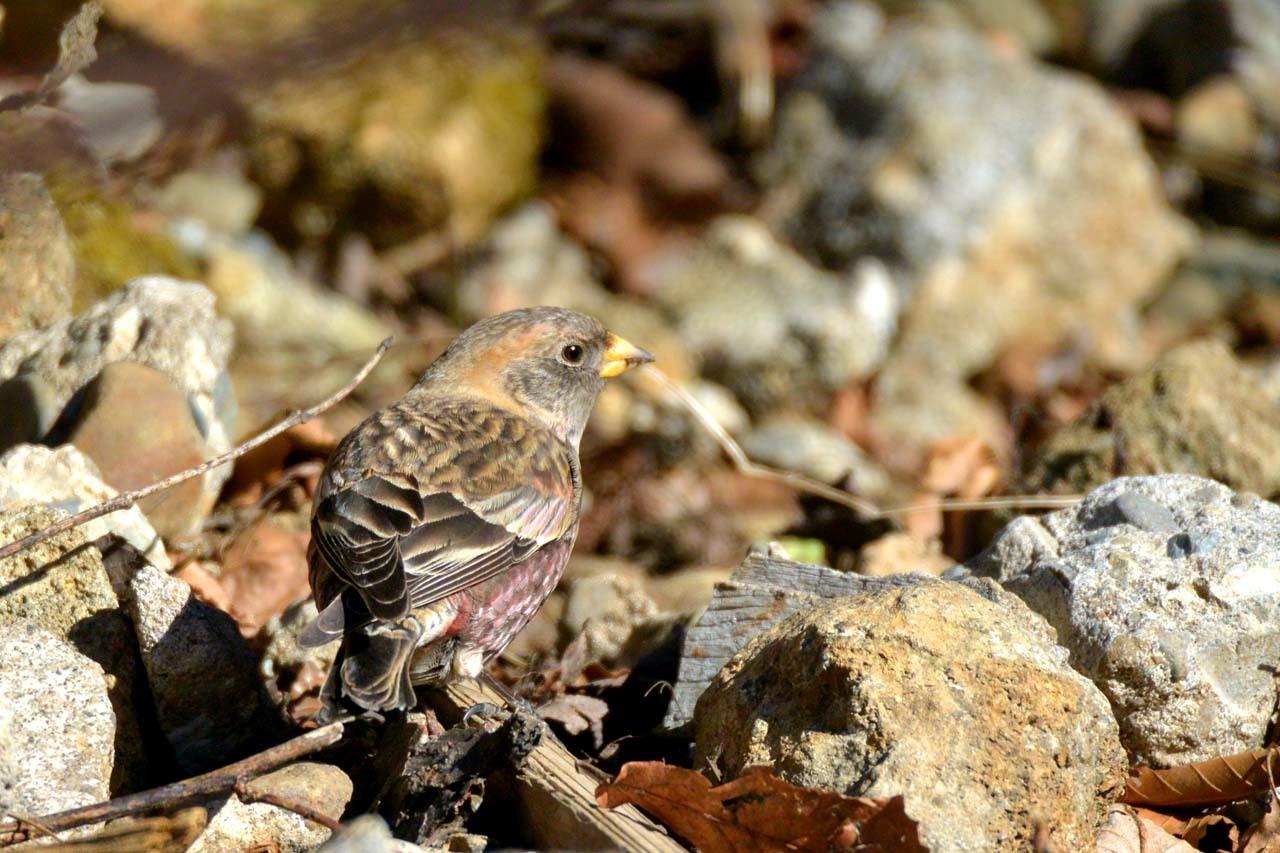 DSC_2448今日の鳥