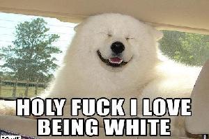whiteprev.jpg