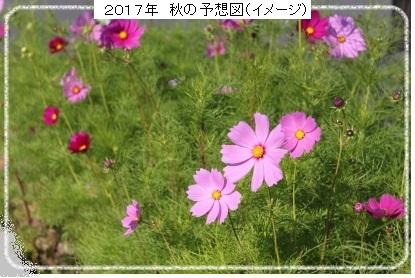 コスモス畑 2017年イメージ 加筆
