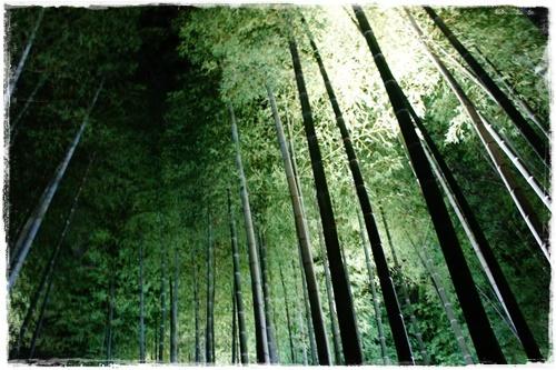 京都3DSC04161