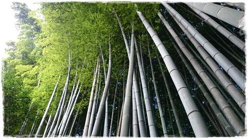 京都4DSC_5848