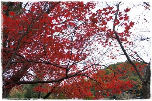 京都4DSC04185