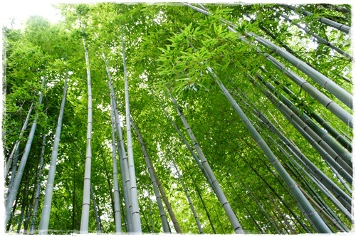 京都4DSC04190