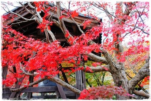 京都4DSC04196
