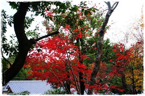 京都4DSC04200