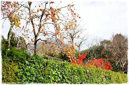 京都4DSC04220