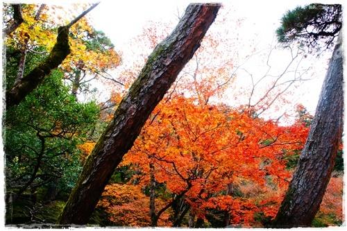 京都6DSC04286