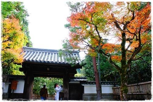 京都6DSC04273