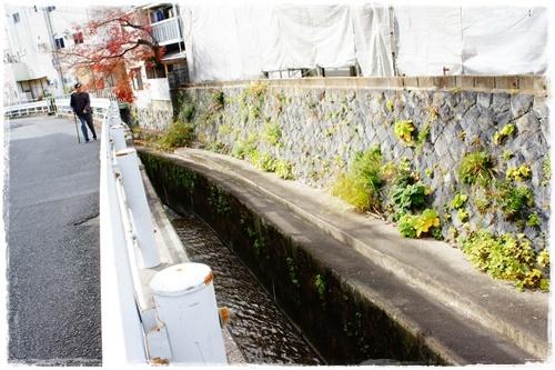 京都6DSC04308