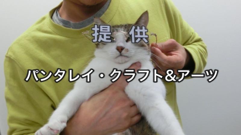 提供メガネ パンタレイ panta rhei 猫 ギャラリー 大田区 池上