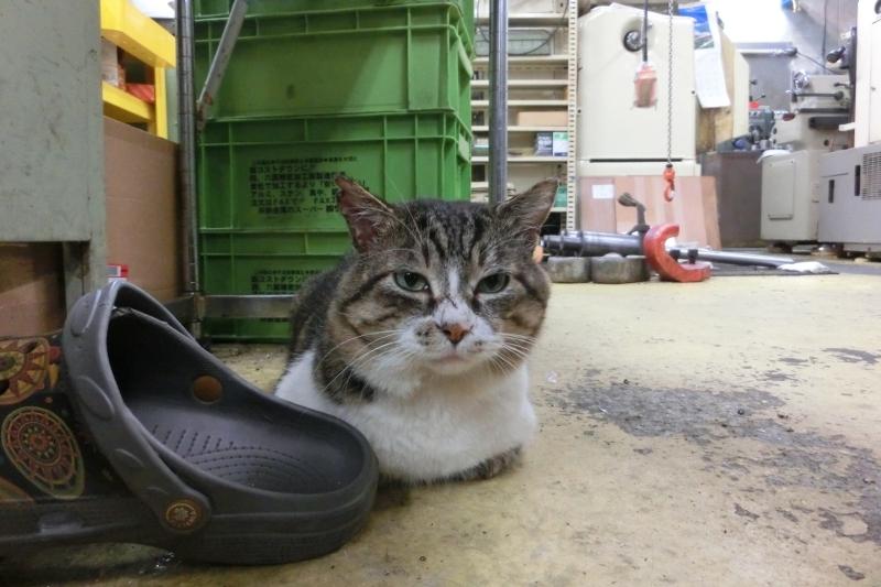パンタレイ panta rhei 大田区 池上 工場長 猫 ねこ 旋盤 ギャラリー