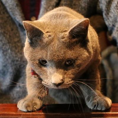 パンタレイ panta rhei 猫 ギャラリー アクセサリー ダミアン 装身具 大田区 池上