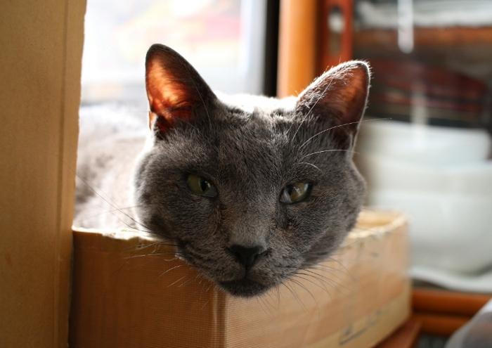 大田区 池上 パンタレイ panta rhei ギャラリー 猫 ねこ ダミアン 装身具
