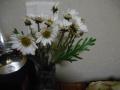 DSCN2671.jpg