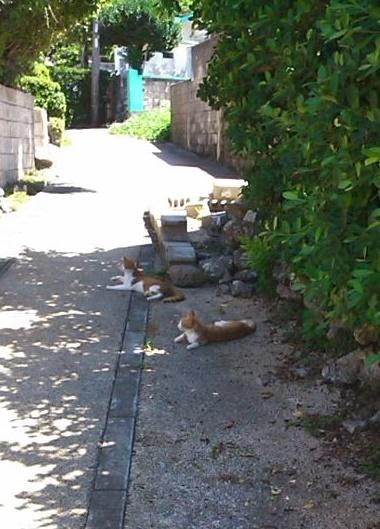 日陰で涼む猫さん