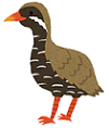 bird_yanbarukuina.png