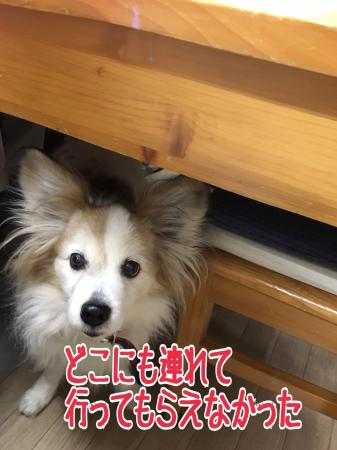 fc2blog_20170104211448197.jpg