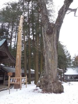 2の柱と大木