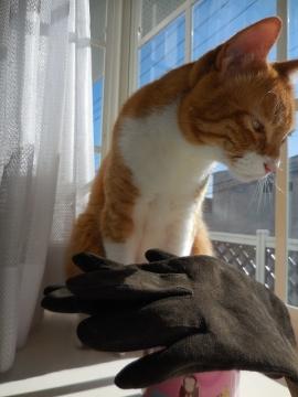 チャロと手袋