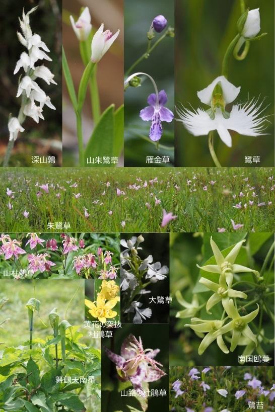 2017年賀状 鳥の名前が付く花