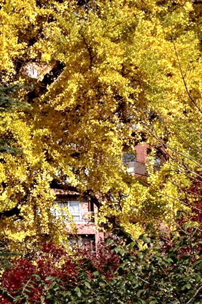 黄葉に埋もれて