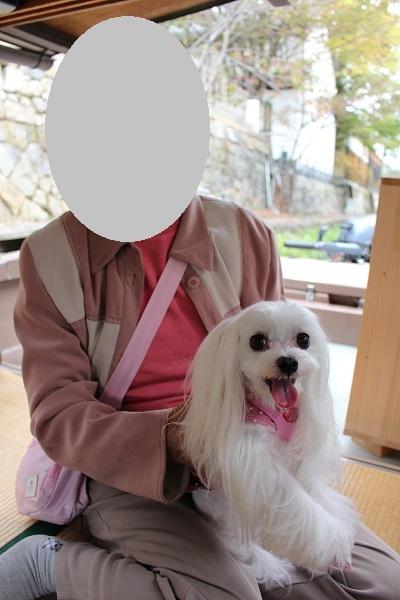 2016.11.11 滋賀県旅行 1日目① 八幡堀めぐり-4