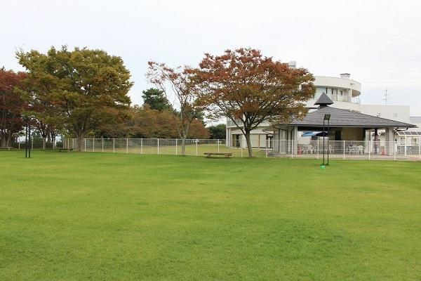 2016.11.14 滋賀県旅行 1日目④ ホテルビワドッグ②ドッグランB-3