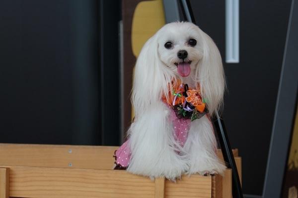2016.11.15 滋賀県旅行 1日目⑥ ホテルビワドッグ④モデルさん-9
