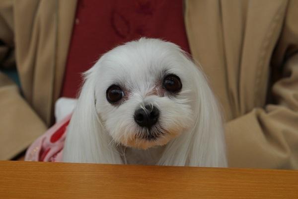 2016.12.02 SUZUKIレディースデー(生チョコ大福)-2