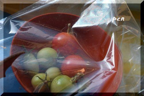 ミニトマト冬1