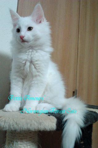 shirai161101_3.jpg