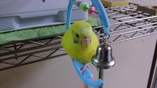小鳥269