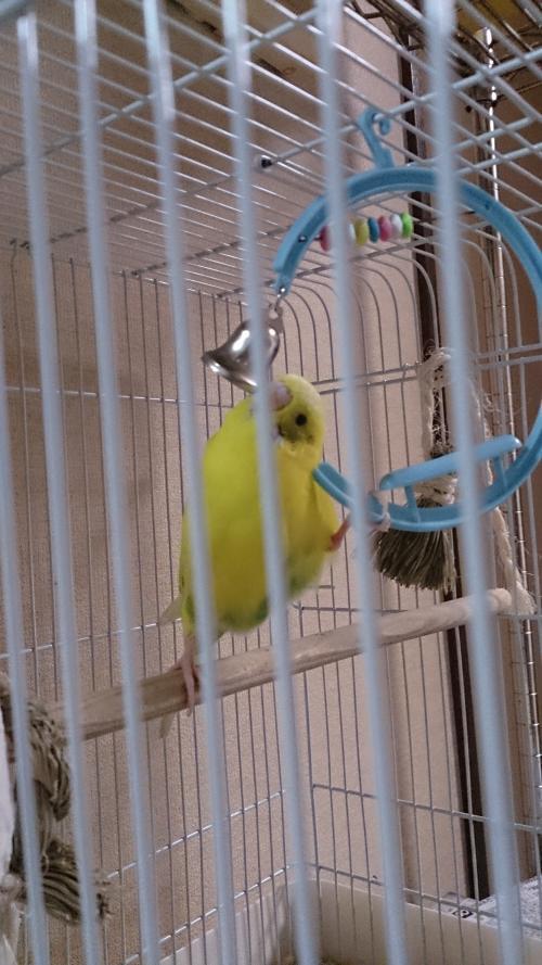小鳥270