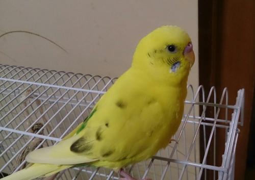 小鳥272