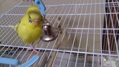 小鳥274