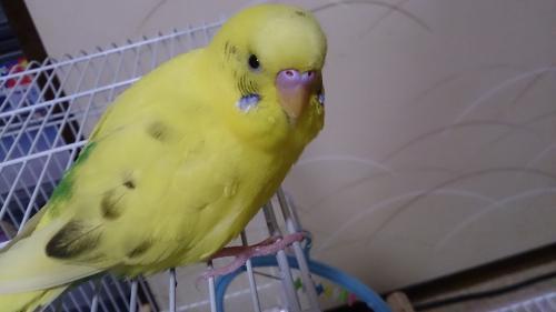小鳥275