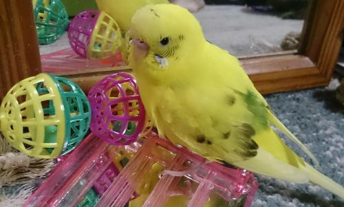 小鳥278